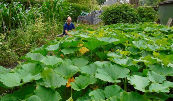 20-vegetable-garden_orig
