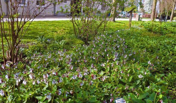 8-stinzen-garden_orig